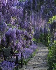 Beautiful garden path covered in flowers