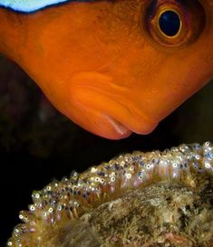Looking for Nemo. These are the breathtaking underwater pictures captured by David Doubilet, a marine life photographer in the wildest parts of the planet.