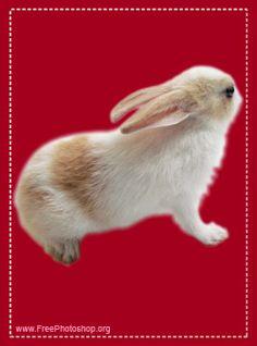 Bunny Psd