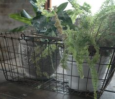 Vintage Shopping Basket with potted plants.