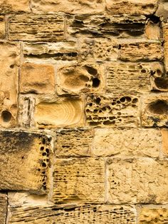Weathered Sandstone of 1666 Almshouse Wall - The highly textured erosion of these sandstone blocks creates a fascinating organic pattern.  Built in 1666 as an almshouse.