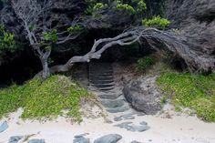 #green #tree #trees #nature #floral #flora #rocks #rock #stairs #hidden #stairway #dark #shadows #white #sand #beach #bush #branches #sandy #beachlife #photography #travel #secret #tourist #traveling #great #ocean #road #greatoceanroad #australia by bexposd