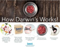 Raw dog food and raw cat food available for home delivery. Based on the Ancestral Diet, our fresh raw food is all-natural, grain-free and gluten-free. Holistic Treatment, Pet Home, Happy Animals, Darwin, Cat Food, Raw Food Recipes, Grain Free, Healthy Life, Your Pet