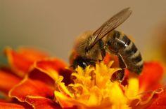 Save the Bees - Greenpeace USA