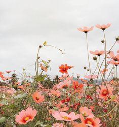 Beautiful springtime flowers