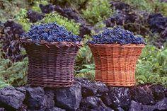 """""""Volcano Wine in the Azores"""" - I Love Azores"""
