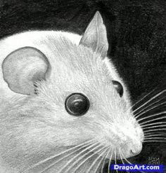 How to Draw a Mouse Head