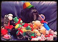 Royalanimals.com Royal Animals, Pet Clothes, Pets, Decor, Products, Decoration, Decorating, Gadget, Animals And Pets