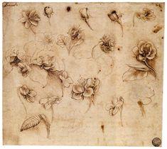 Leonardo da Vinci, Flower study