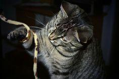 Kaninchenfan Lucky - Mein Kaninchenloch: How to...  catch an cat ^_~ you need no fish, only an rod hehe ♡  #cats #katzen #neko #pets #haustiere   http://kaninchenfanlucky-meinkaninchenloch.blogspot.de/2014/04/how-to.html