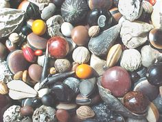 www.seabean.com - Sea-Bean Games - Name that Sea-Bean!