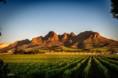 Wine farm in late evening near Stellenbosch. Eternal Sunshine, Responsible Travel, Countries Of The World, The Places Youll Go, Photo Credit, Monument Valley, South Africa, Beautiful Places, Photos