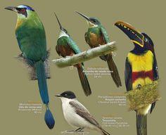 Guia: as aves do Pantanal | ((o))eco