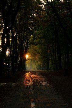 Aleja zachodzącego słońca │ fot. Anna Miklaszewska