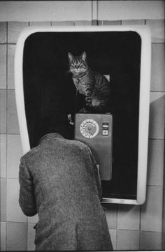 Taxiphone au métro Tuileries [Martine Franck,1977] I think the cat is calling home.....