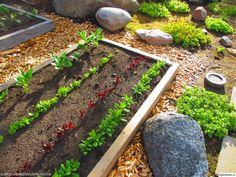 piha,istutuslaatikko,kasvimaa,istutus,puutarha,kasvatus