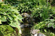 Lindas trädgårdsblogg: Vatten i trädgården. Lilla Madeira trädgårdstoppen