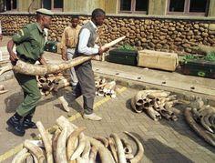 La Comisión Europea aprueba el Plan Europeo contra el comercio de animales y plantas silvestres   20minutos.es