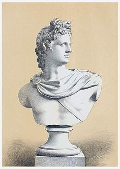 Bust copied from Apollo Belvedere