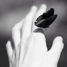 Little butterfly...#gorgeous #goodmorning #hand #blackandwhite #blackandwhitephotography #followme #followmephotography #cute #nice #popart #photo #photograph ##photography