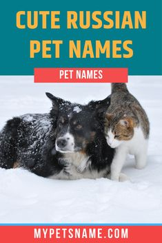 Pet Names For Dogs, Cute Pet Names, Russian Dogs, Big Country, Outdoors, Birds, Play, Cats, Nature