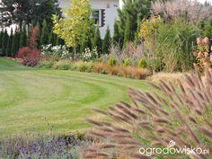 Zielonej ogrodniczki marzenie o zielonym ogrodzie - strona 850 - Forum ogrodnicze - Ogrodowisko