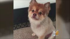 Dog Found Dead During Layover Between Delta Flights | HuffPost