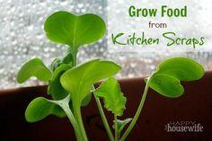 20 money-saving gardening ideas