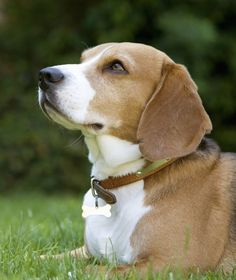 10 Best Dog Breeds for Families - Dogs Tips & Advice | mom.me