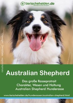 Australian Shepherd Rasseporträt – Charakter, Haltung & Pflege Dogs, Animals, Companion Dog, Nursing Care, Cats, Animaux, Doggies, Animal, Animales