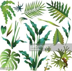 A vector illustration of various green tropical rainforest leaves including heliconia, hawaiian fern, stag horn fern, giant philodendron, palm leaf and elephant ear.