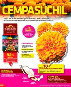 Cempasúchil