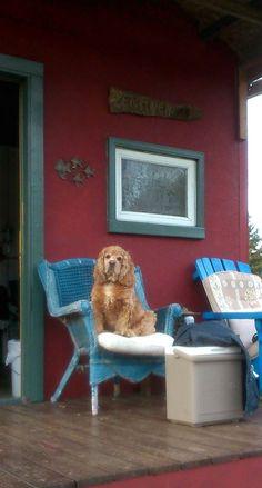 Zen, River, Chair, Garden, Furniture, Home Decor, Recliner, Homemade Home Decor, Garten