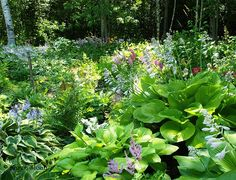 Shade garden - hosta and fern heaven