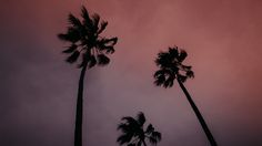 Palm Trees at Sunset in Kiama, NSW