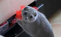 Guilty cat's adorable expression after caught opening drawer (VIDEO)