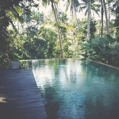 Outdoor space - pool surrounded by palm trees