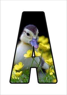 Monogram Alphabet, Parrot, Initials, Cow, Preschool, Letters, Bird, Adventure, Alphabet