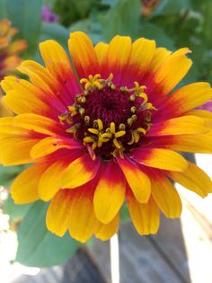 Zinnia. Butterflies and Bees love this plant. They make long lasting cut flowers. One of my favorite flowers to grow from seed.