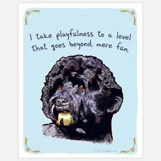 Portuguese Water Dog now featured on Fab.