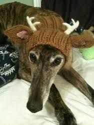 Image result for funny knitting dogs