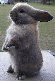 Good looking rabbit - Hase - Rabbits - Adorable Animals Cute Baby Bunnies, Cute Kittens, Cute Baby Animals, Animals And Pets, Cute Babies, Funny Animals, Adorable Bunnies, Funny Dogs, Animal Pictures