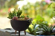 猿恋葦の画像 by ekko.yさん デビーとホワイトストーンクロプと ブロンズ姫とルビーネックレスと黄麗とロゲルシーと子宝錦と多肉植物と多肉植物寄せ植え (2015月8月2日) みどりでつながるGreenSnap
