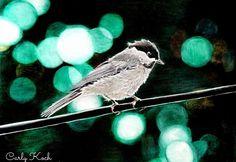 Bird, Travel, Animals, Inspiration, Biblical Inspiration, Viajes, Animales, Animaux, Birds