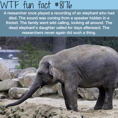 Elephants grief - WTF fun fact
