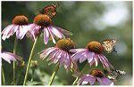 Butterflies and birds wildflower mix via bbbseed