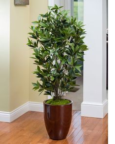 Decorate with Designer Quality Silk & Artificial Floor Plants at Petals