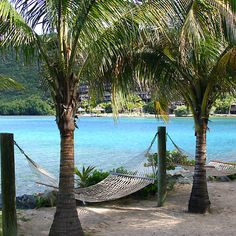 Tropical Hammocks