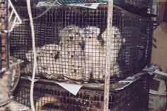 HELP PUT AN END TO PUPPY MILLS!   Urge Congress to vote YES on the PUPS Act(The Puppy Uniform Protection and Safety Act)! If passed, the bill will require breeders who sell more than 50 dogs each year directly to the public to be licensed & inspected by the USDA & to provide the same basic standards of care as those who sell wholesale to pet stores The bill will petition:crack down on the worst offenders who hide behind websites,classified ads & mail order catalogs. PLZ Sign & Share!
