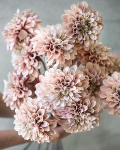 Perhaps my favourite from the faux collection . Blush Dahlia, available online with international delivery xx Blush Flowers, Fall Flowers, Beautiful Flowers, Wedding Flowers, Dahlia Wedding Bouquets, Dahlia Flowers, Silk Flower Bouquets, Flower Farm, My Flower